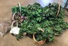 Lot of Baskets with Greenery plus lots of extra greenery