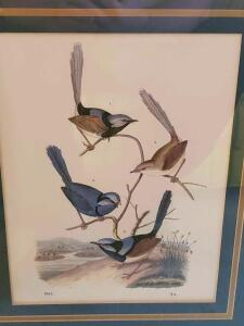 "A beautiful print of 4 birds, dated ""1853. ?) In a vintage/antique frame"
