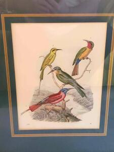 "A beautiful print of 4 birds, dated ""1855. ?) In a vintage/antique frame"