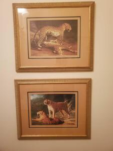 2 framed and matted prints of tigers, 20 x 25 each