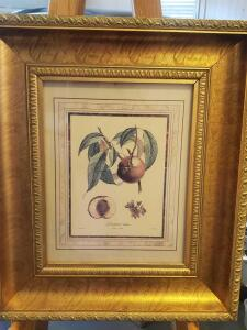 Vintage framed and matted print of a peach, by Gabriel sculp, 22 x 18