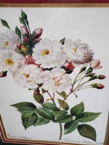 "Lovely lithograph titled ""Rosa Noisettiana"" (pink rose) by Philippe Nowette"