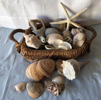 Hodge Podge of Shells in a basket - excellent for decorating